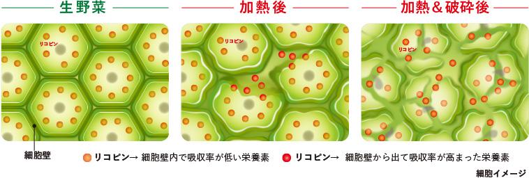 細胞壁とリコピン画像