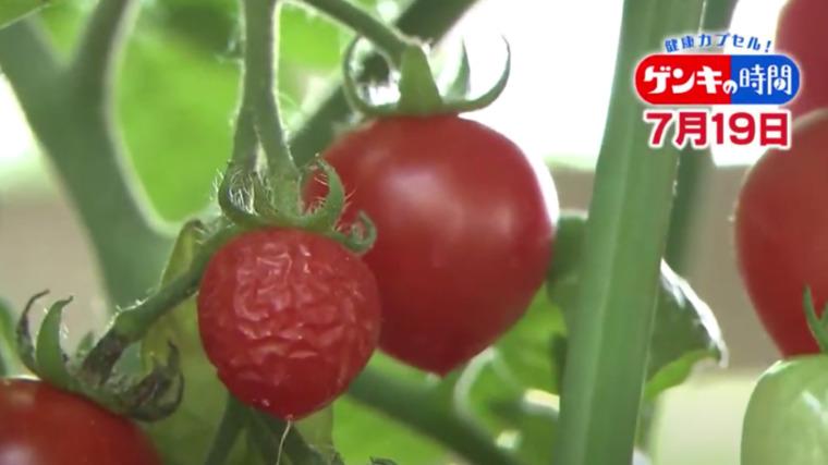 ミニ トマト しわしわ