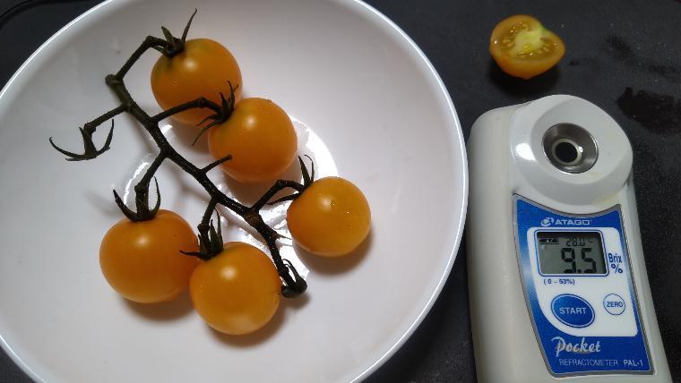 みらどり産完熟ミニトマト糖度