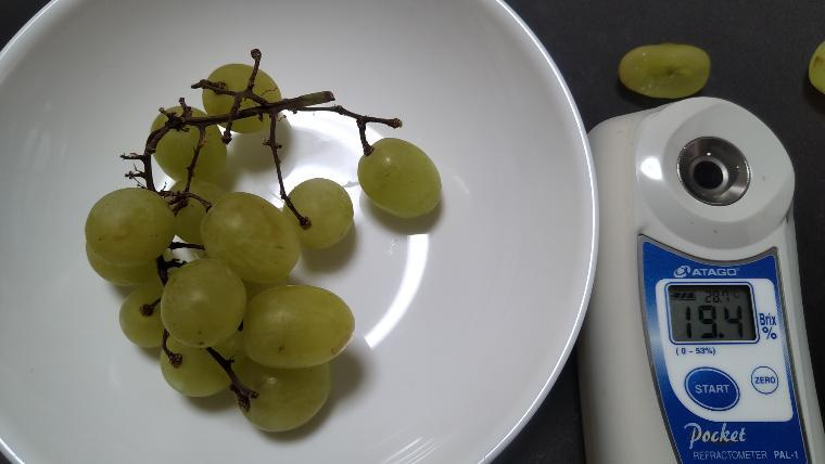 緑のブドウの糖度