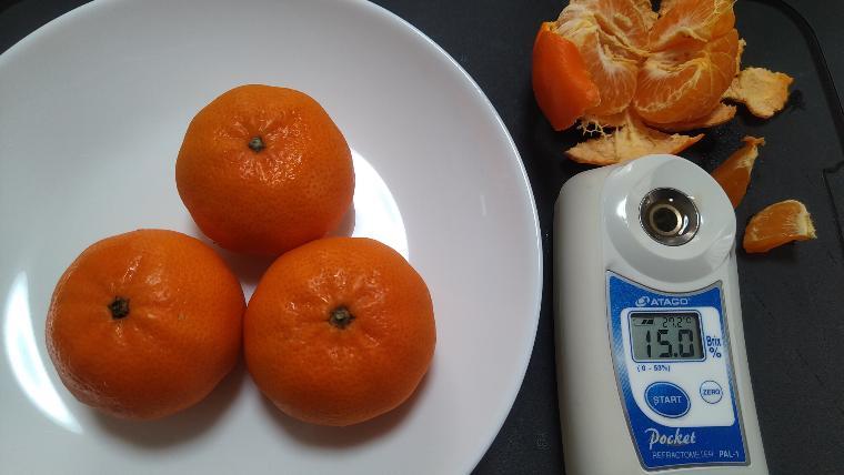 マーコット糖度実測