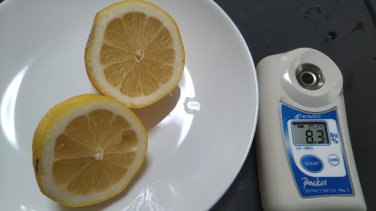 レモンの糖度実測画像