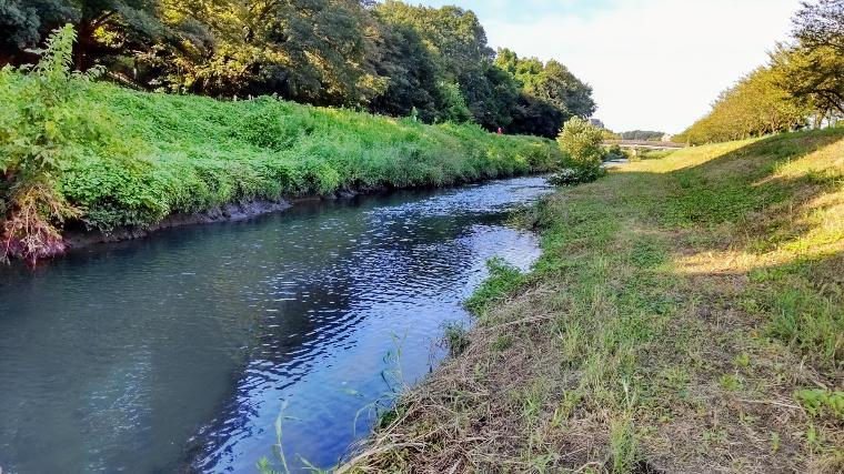 パン鯉おすすめの小河川