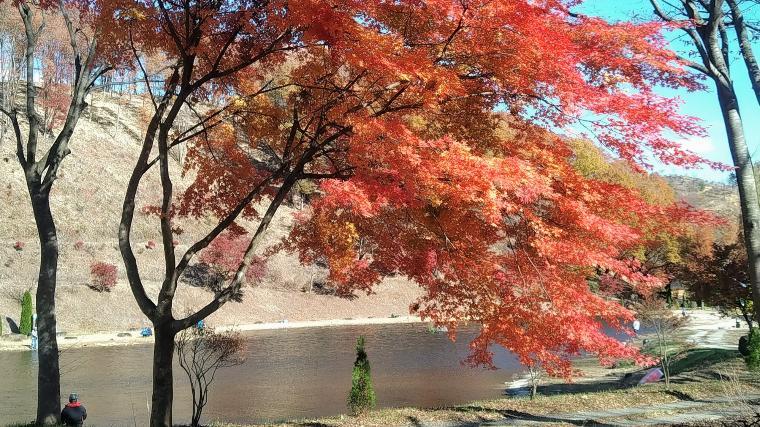白河フォレスト1号池